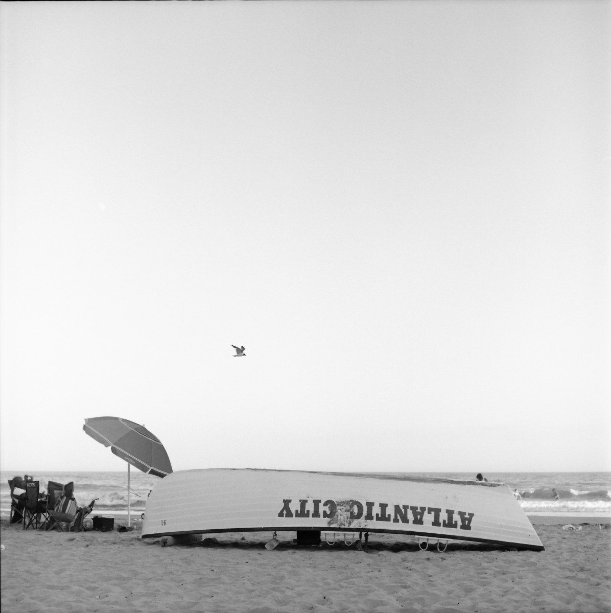 bird over rowboat atlantic city