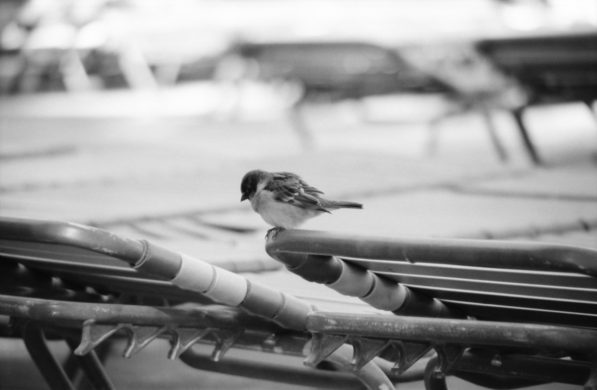 bird-vegas