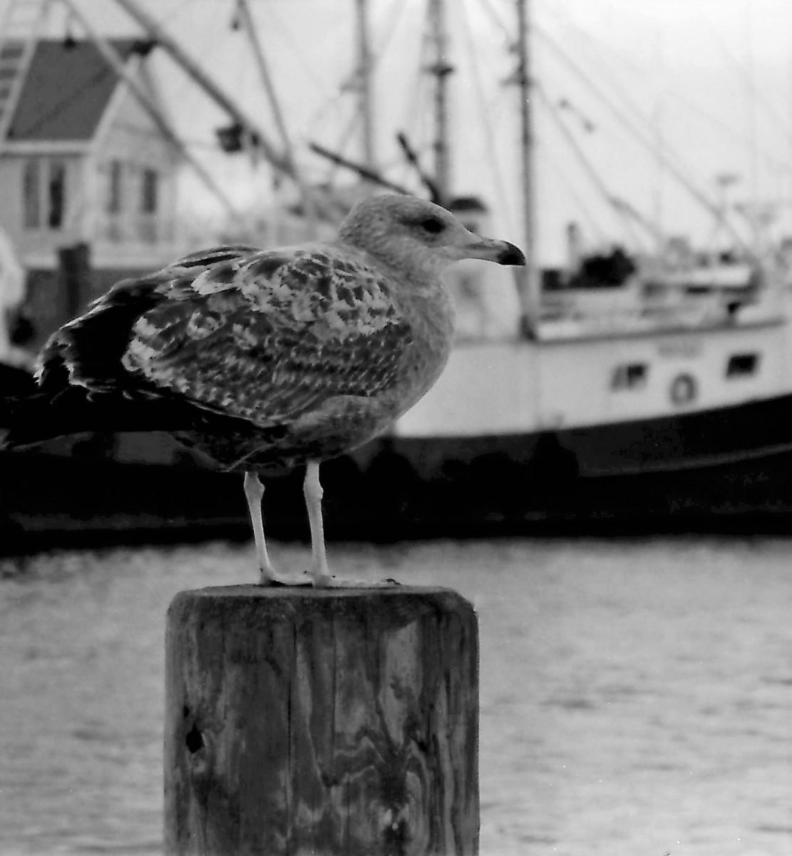 bird-pt-plst-2